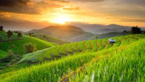The Paradise , soul harvest mission